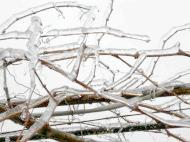 Фото - Як підготувати і надійно укрити виноград на зиму