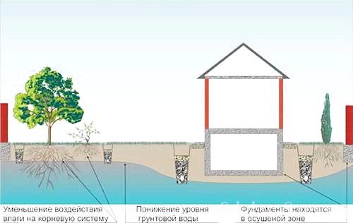 Фото - Як правильно здійснити дренаж ділянки і відвести воду на дачі?