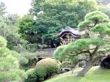 Фото - Які рослини вибрати для саду в японському стилі