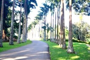 Фото - Пераденія - зелена скарбниця Цейлону