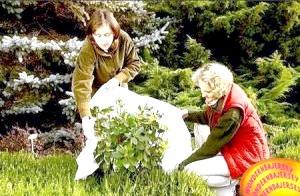 Фото - План осінніх робіт в саду для дбайливих дачників