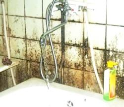 Фото - Цвіль у ванній: причини, профілактика і боротьба