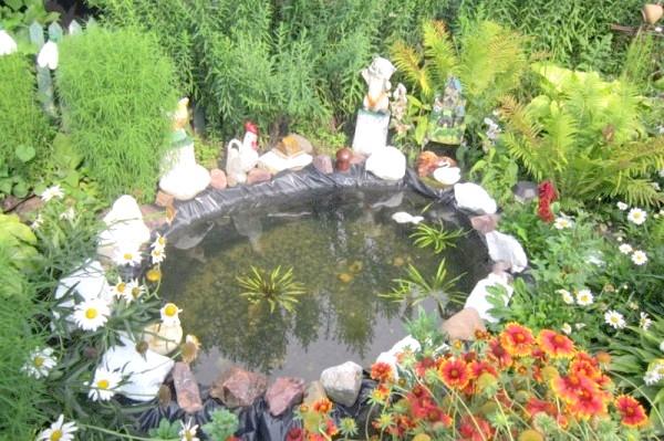 Фото - Ставок для вирощування квітучих водних рослин