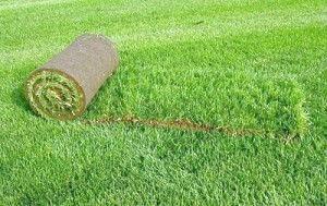Фото - Сезонні правила догляду за газоном: як продовжити життя газонної трави