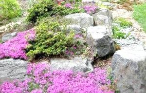 Фото - Вибираємо квіти та декоративні рослини для альпійської гірки