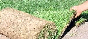 Фото - «Зелена галявина от-кутюр»: чим гарний рулонний газон