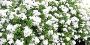 Фото - Свій сад - вирощена краса