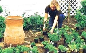 Фото - Вибираємо рослини для весняних клумб і квітників: однорічні та багаторічні «первоцвіти»